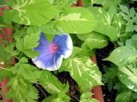 gardening_080706.jpg