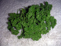 gardening_ob01_05-01.jpg