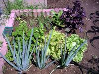gardening_ob01_05.jpg
