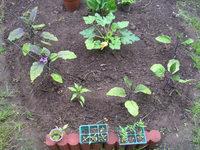 gardening_ob02_03.jpg