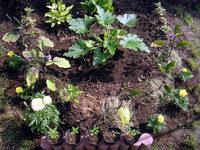 gardening_ob02_05.jpg
