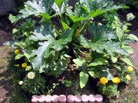 gardening_ob02_06.jpg