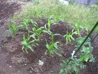 gardening_ob03_02.jpg
