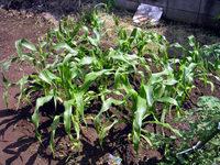 gardening_ob03_04.jpg