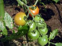 gardening_ob04_06-01.jpg