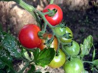 gardening_ob04_07-01.jpg