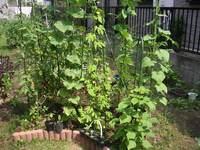 gardening_ob04_08.jpg